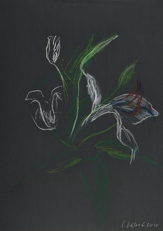 Jitka Válová - Květy lilie