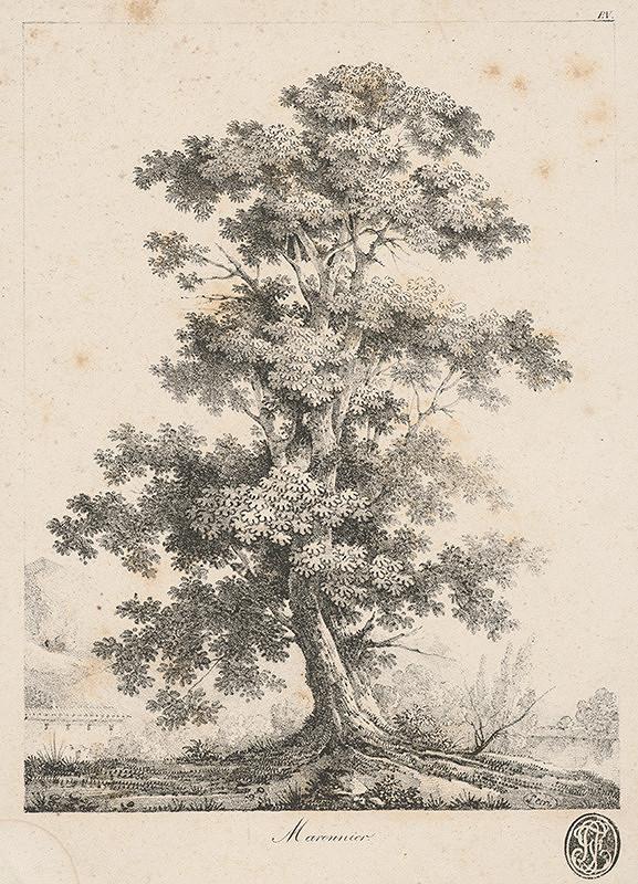 Francúzsky grafik z polovice 19. storočia – Gaštan