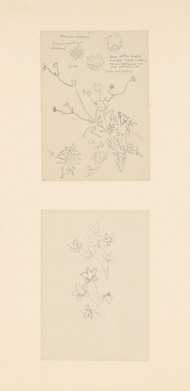 Emil Makovický - Dva náčrty kvetov
