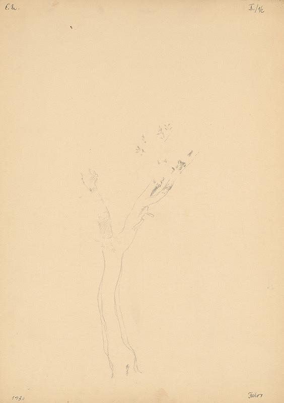 Emil Makovický – Štúdia stromu