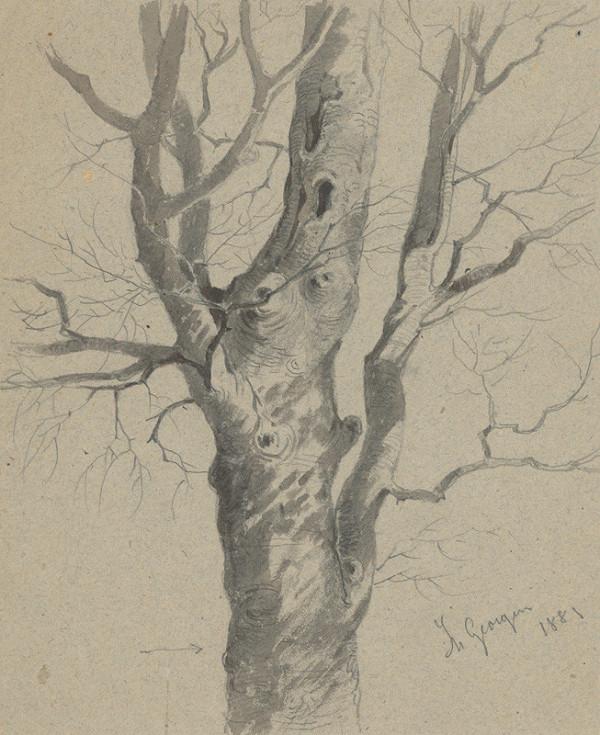 Friedrich Carl von Scheidlin - Štúdia uzlovitého kmeňa stromu