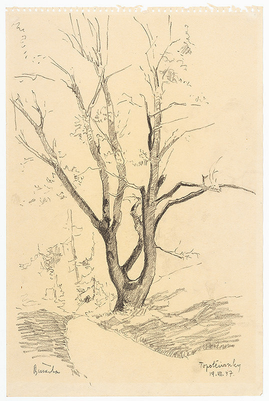Anton Djuračka – Štúdia stromu