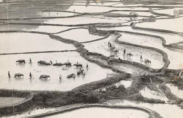 Ján Cifra – Vietnam. Oranie rýžovíšť