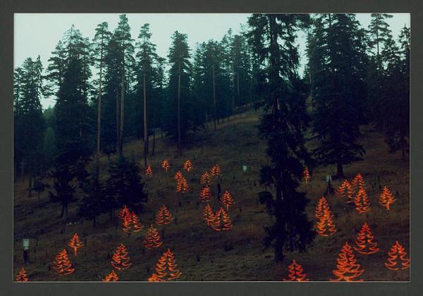 Róbert Kočan – Svetlom do tmy. Červené smreky