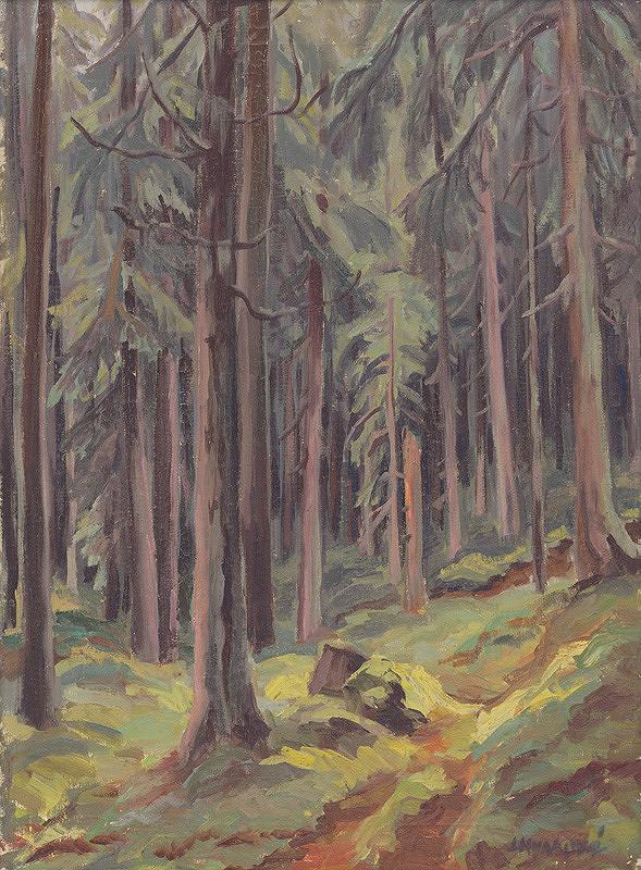 Ludmila Hynková - Les v Bielovodskej doline