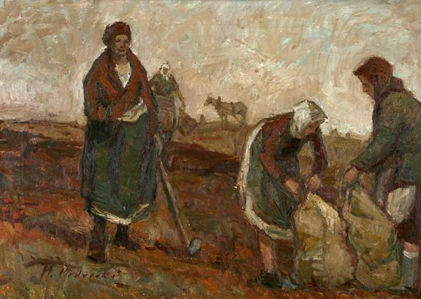 Mária Medvecká - Zbieranie zemiakov