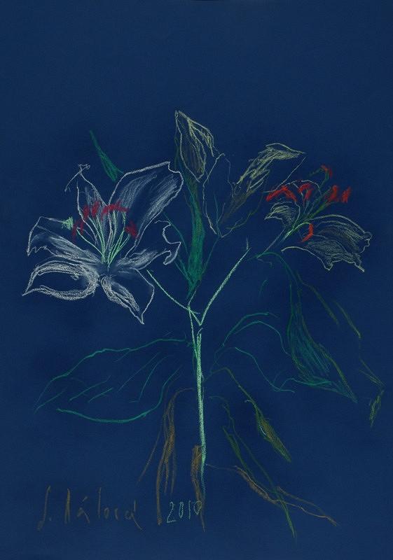 Jitka Válová - Bílá lilie