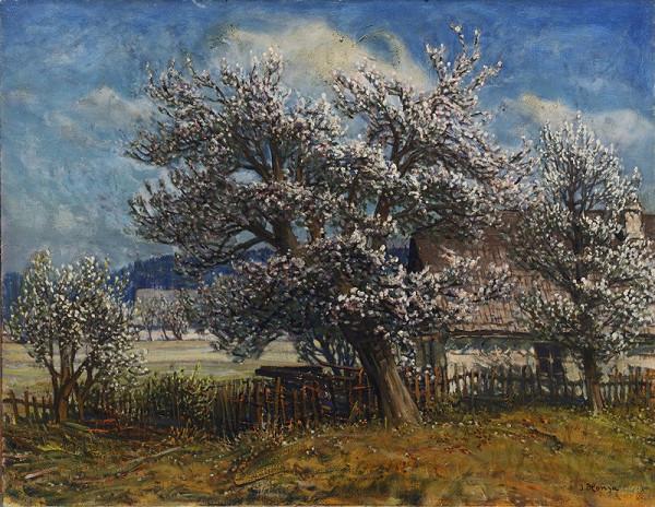 Jan Honsa – Kvetoucí jabloň