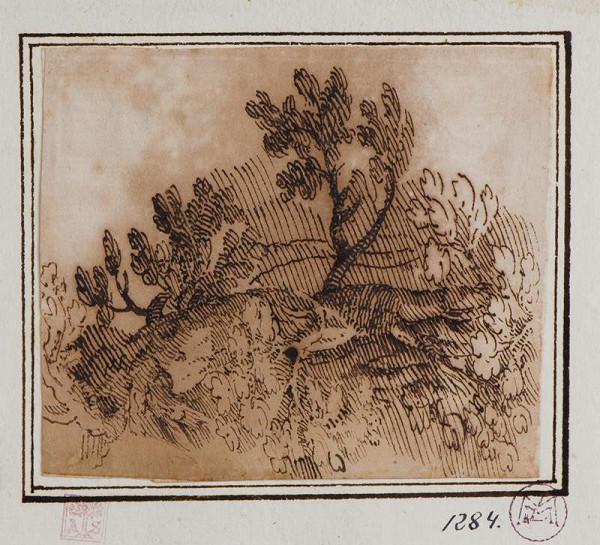 neznámý - Studie stromů