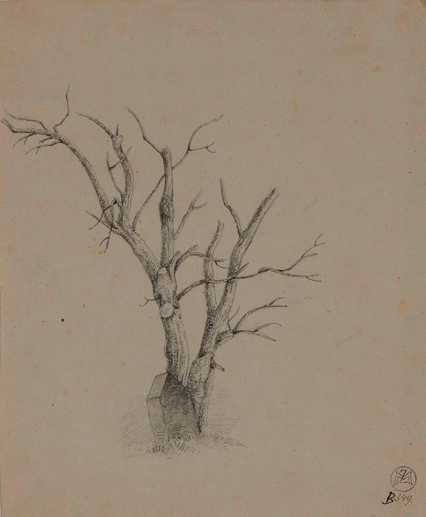 Mořic (Mauritz) Vilém Trapp – studie stromu