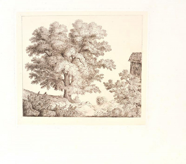 Bedřich Silva Tarouca - Strom