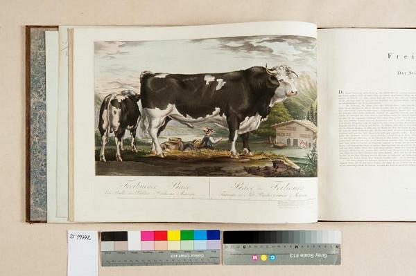 E. W. Witte – Deutschlands Rindvieh-Racen nach der Natur dargestellt und beschrieben. Erstes Heft