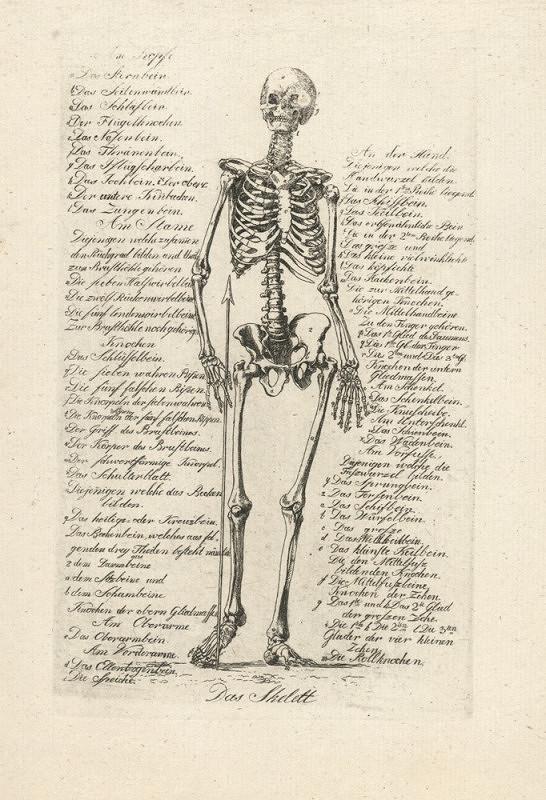 František Čepelka (Czepelka) – Anatomie člověka