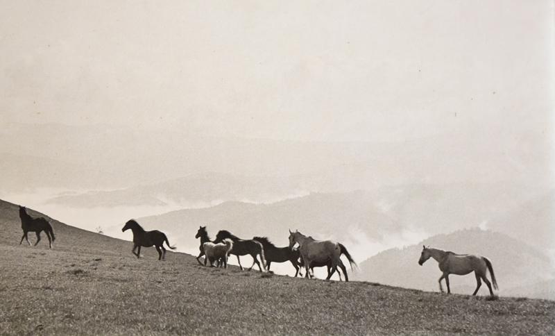 Magdaléna Robinsonová – Kone na horách, okolo 1960, Galéria Miloša Alexandra Bazovského v Trenčíne