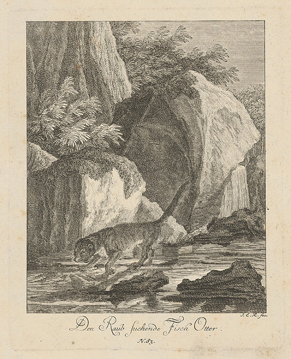 Stredoeurópky grafik J.E.R. z prelomu 18. - 19. storočia – Vydra na love rýb