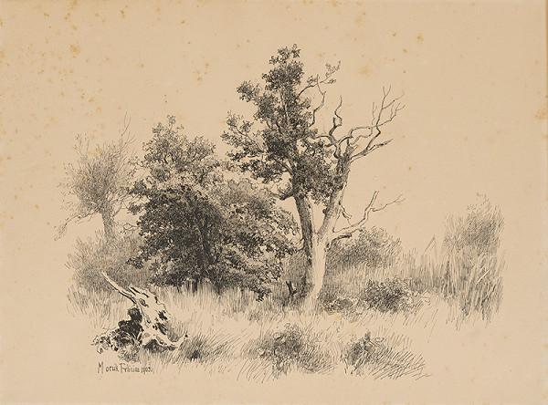 Felicián Moczik – Štúdia stromov