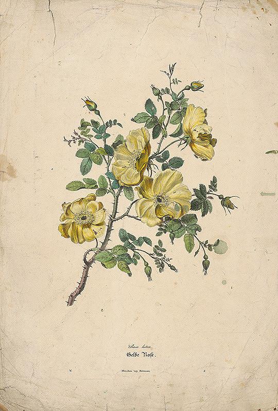 Nemecký maliar z 19. storočia - Šípové ruže