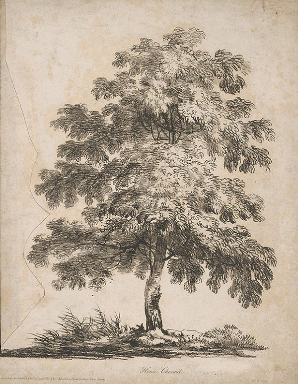 Stredoeurópsky maliar z 19. storočia – Strom