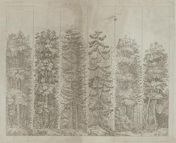 Stredoeurópsky maliar z 19. storočia - Šesť druhov stromov