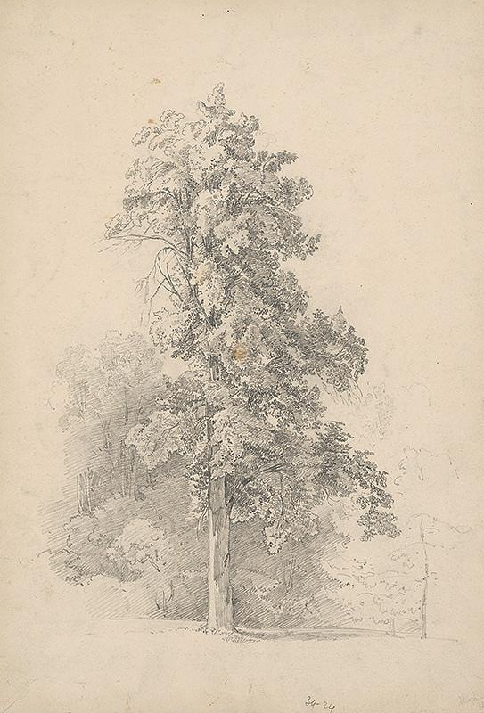 Stredoeurópsky grafik z 19. storočia – Strom-buk