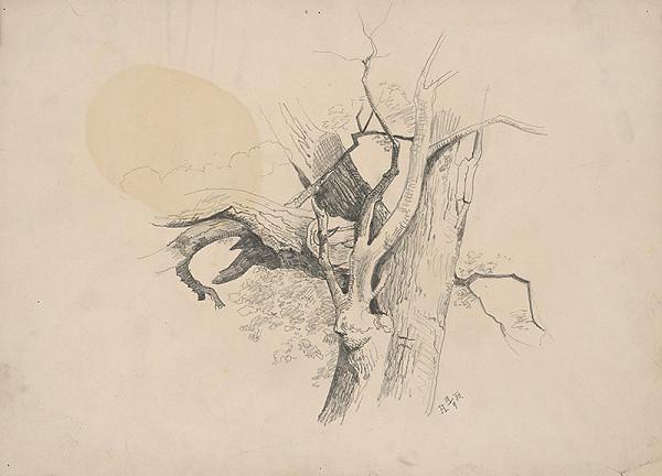 Stredoeurópsky grafik z 19. storočia - Kmeň stromu
