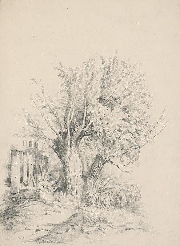 Stredoeurópsky grafik z 19. storočia - Vŕby
