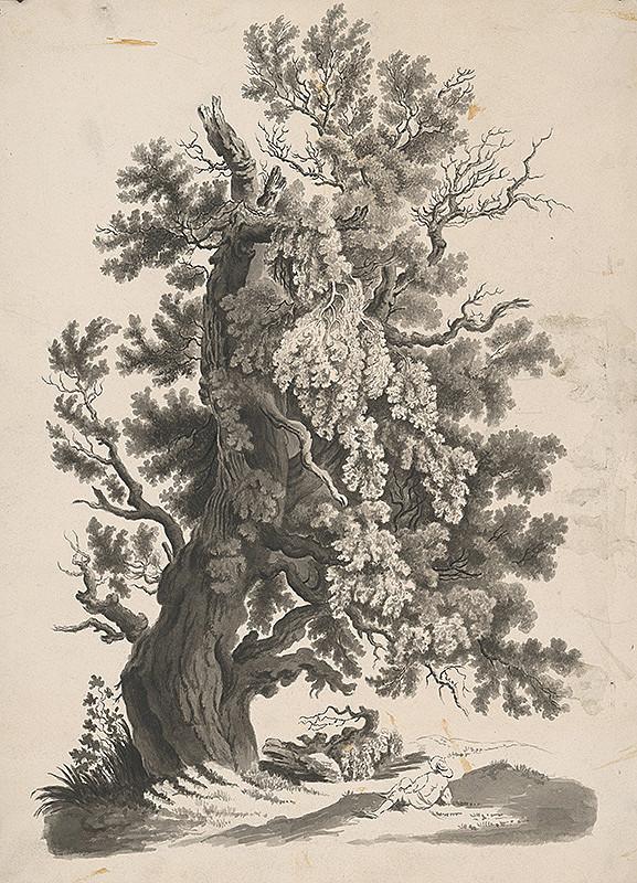 Stredoeurópsky grafik z 19. storočia - Strom-buk