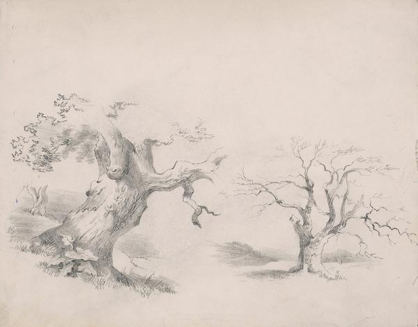 Stredoeurópsky grafik z 19. storočia – Štúdia stromov