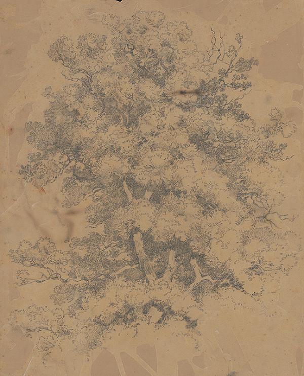 Stredoeurópsky grafik z 20. storočia – Strom
