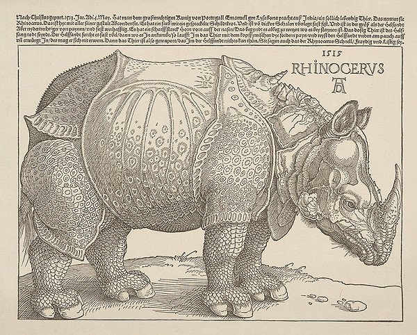 Albrecht Dürer – Rhinocerus