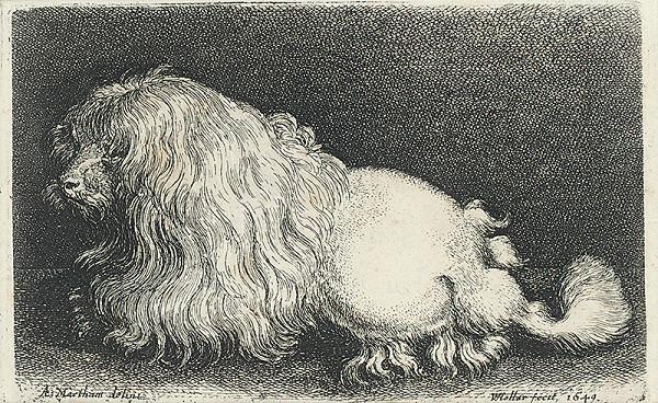 Václav Hollar, A. Maetham – Boloňský psík