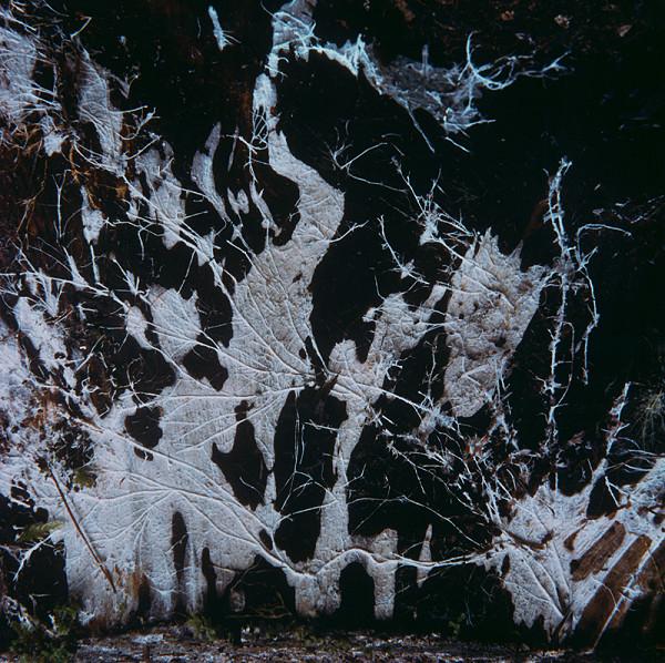 Martin Martinček – Tajomstvo hory (Volavky) z cyklu farebných fotografií, 15 ks