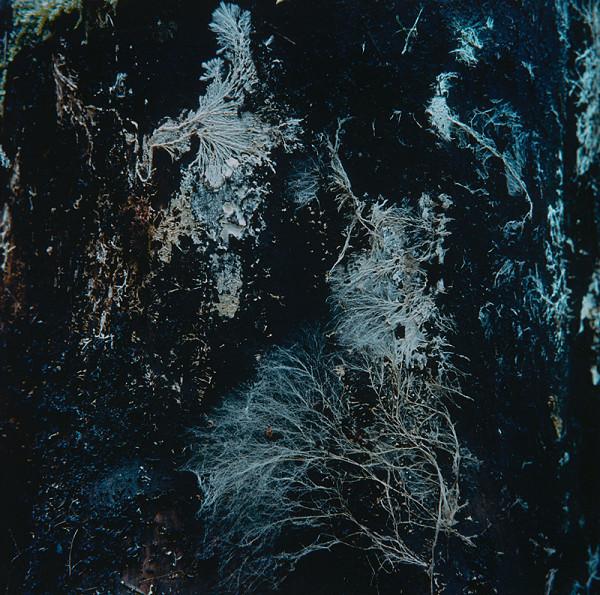 Martin Martinček – Kompozícia v modrom z cyklu Tajomstvo hory
