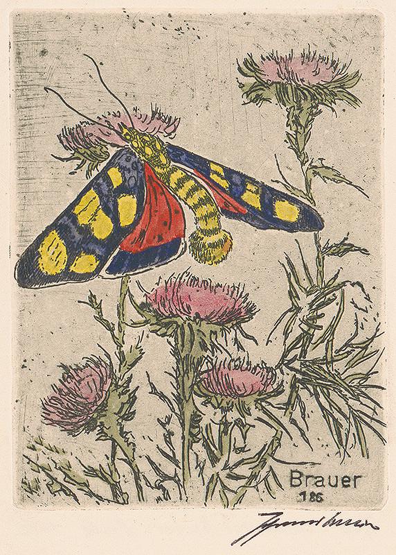 Johannes Brauer – Exotický motýľ