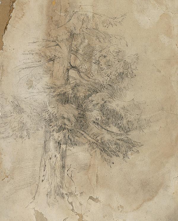 Ladislav Mednyánszky – Štúdia ihličnatého stromu