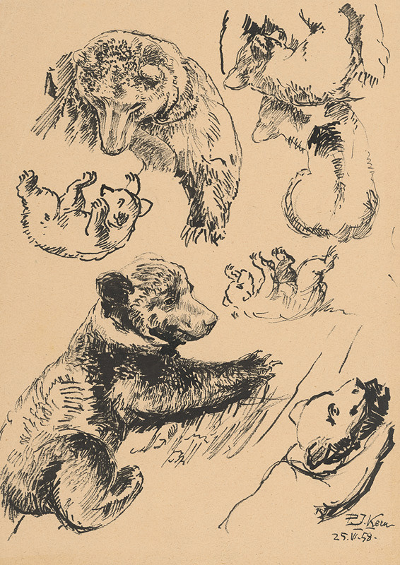 Peter Július Kern – Štúdia medveďov