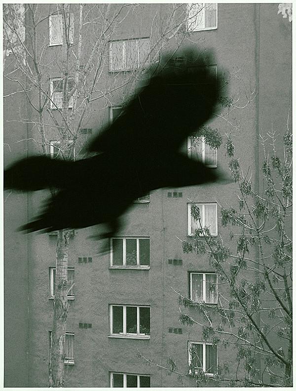 Vlado Eliáš – Bird