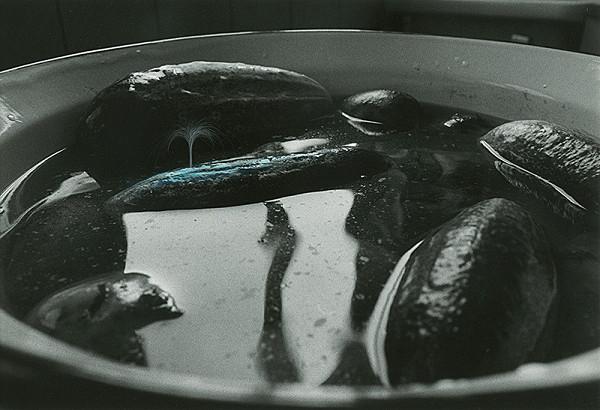 Peter Župník – Veľryba