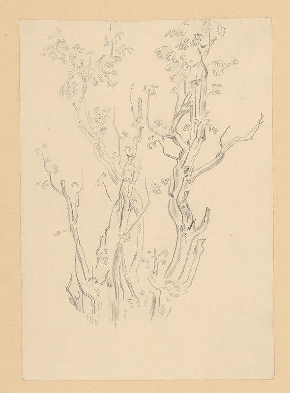 Emil Makovický – Štúdia stromov