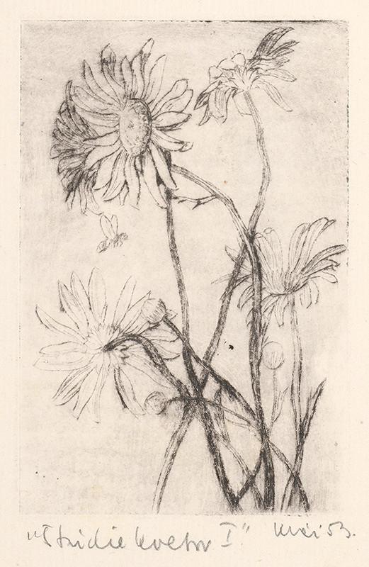 Fero Kráľ - Štúdie kvetov I.