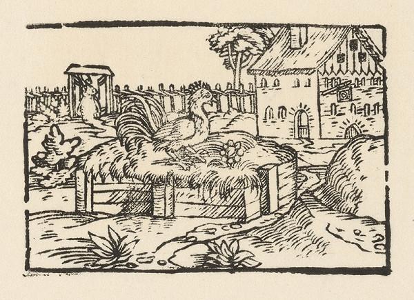 Nemecký grafik z 2. polovice 16. storočia – Kohút na smetisku