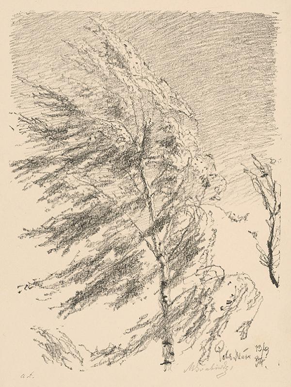 Max Švabinský – Breza vo vetre