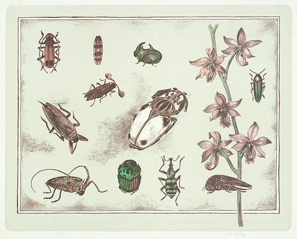 Anton Hollý – Zátišie s ružovou orchideou