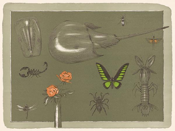 Anton Hollý – Motýľ
