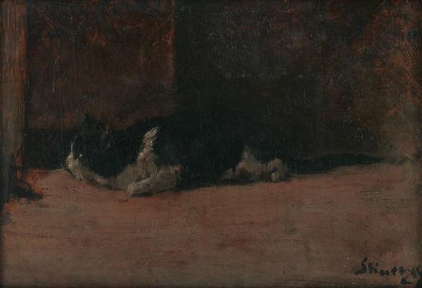 Dominik Skutecký – Štúdia mačky
