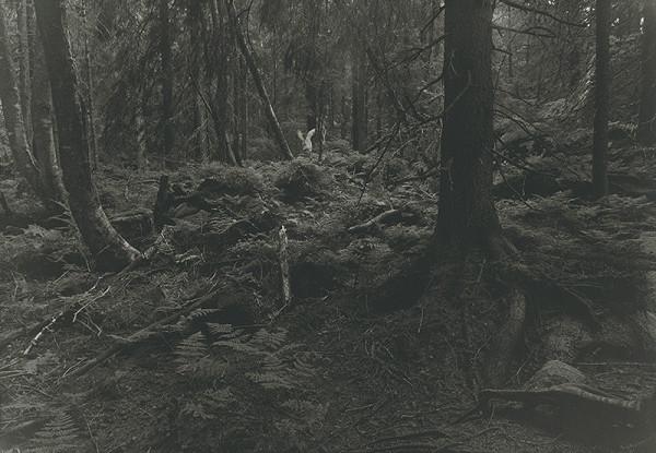 Róbert Kočan – Anjel strážený II