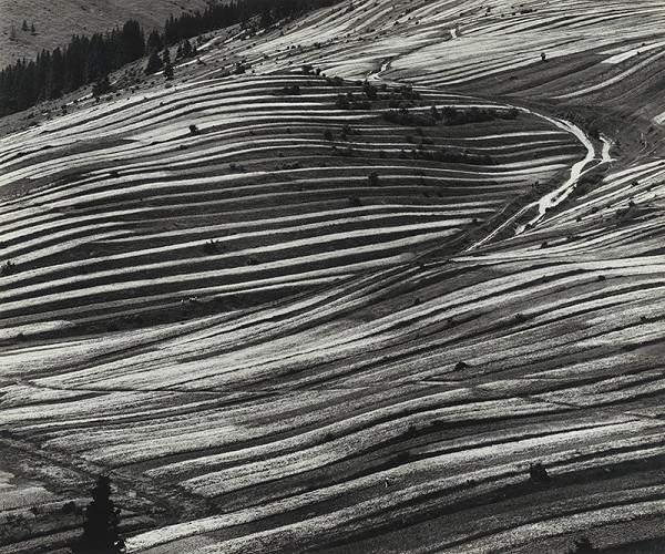 Martin Martinček – Polia pod horami