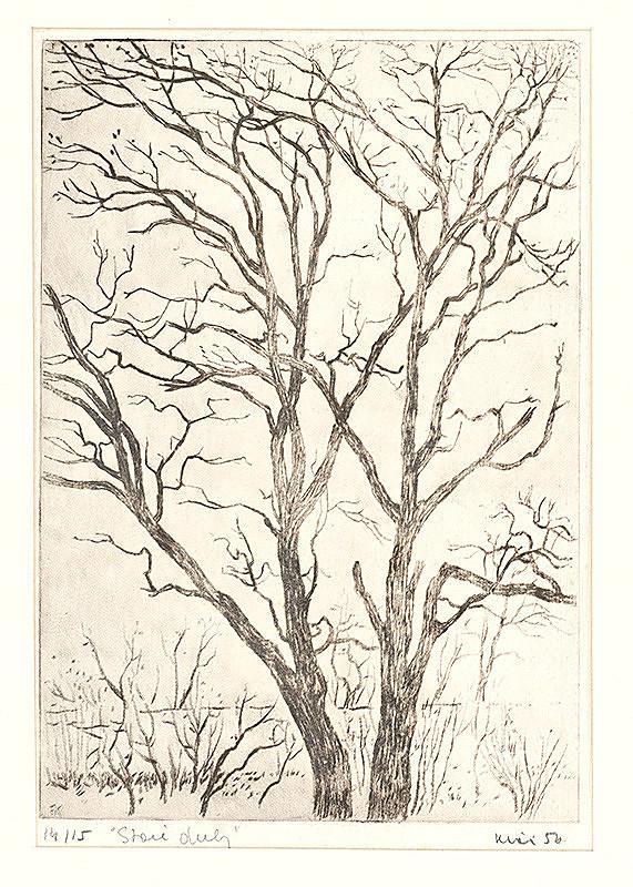 Fero Kráľ - Staré duby