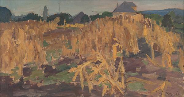Štefan Hapák – Kukuričné pole