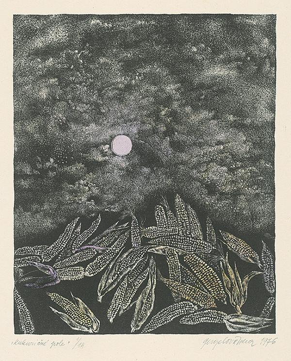 Viera Gergeľová – Kukuričné pole